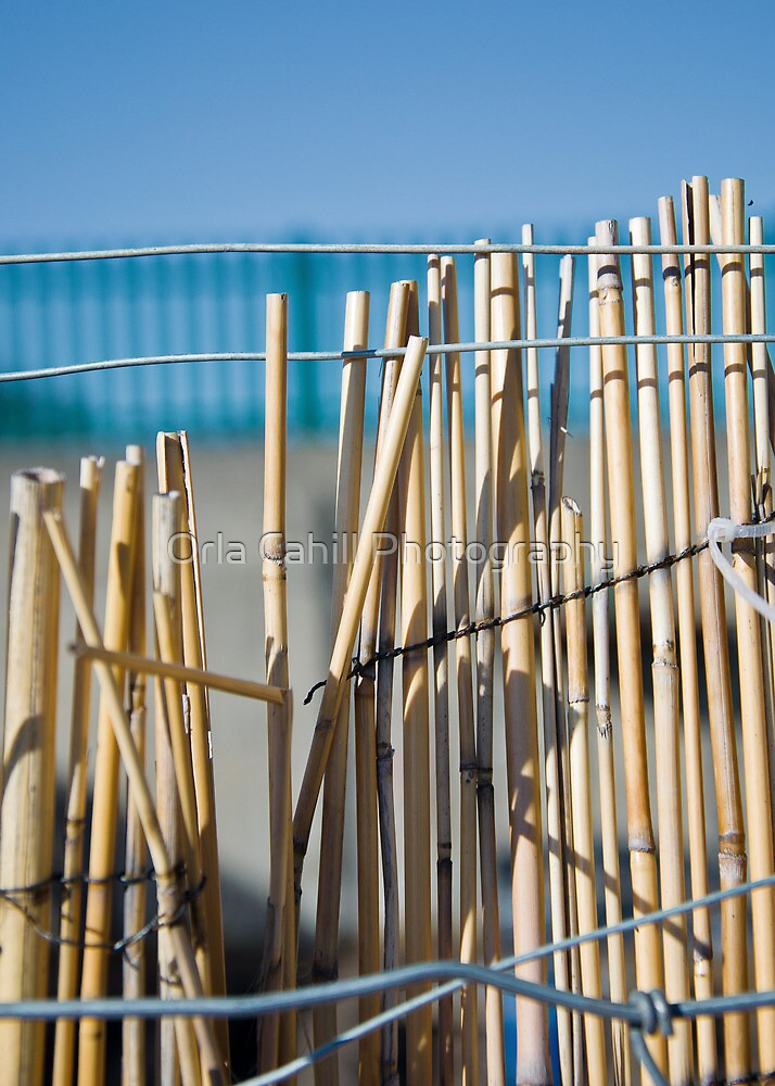 Bamboo Fence by Orla Cahill Photography