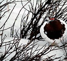 Willow Ptarmigan by May-Le Ng