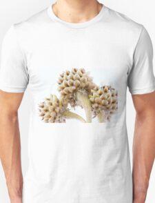 Three Globe Cornflower Seed Heads - Macro T-Shirt
