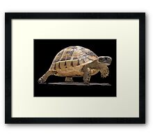 Marching Baby Tortoise Cartoon Vector Isolated Framed Print