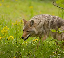 Taking Time To Smell The Flowers by Jeff Weymier