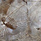 lace I by Floralynne