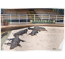 Welcome To Gatorland Poster