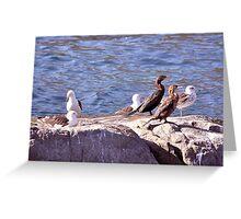 Aves de la Costa ............................................Oceano Pacìfico Greeting Card