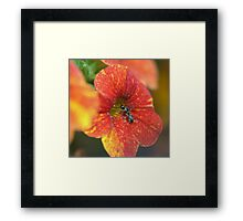 A Working Ant............ Framed Print