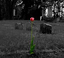 Grave Tulip by Jennifer  Causley