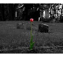 Grave Tulip Photographic Print