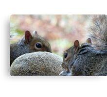 Squirrel Hard Rock Café Canvas Print