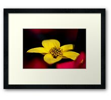 A Flower up close... Framed Print