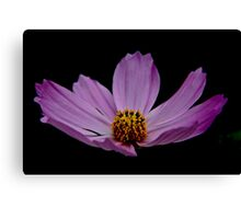 Pink Flower For Tina Canvas Print
