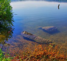 Lake Kochelsee Shore by Daidalos