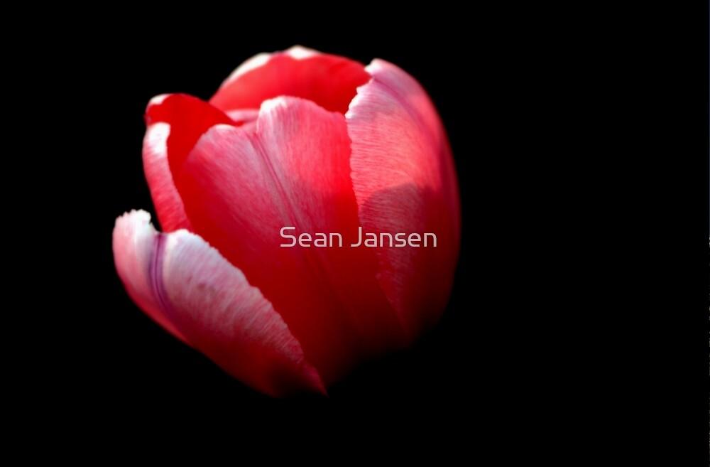 Ruby by Sean Jansen