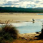 Falmouth East Coast Tasmania by waxyfrog