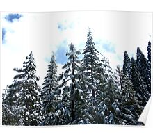Snow topped trees-Sequias Poster