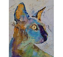 Sphynx Cat Photographic Print