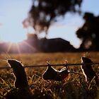Cannibal mice! by Vanessa Sartor