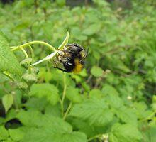 Acrobatic Bumble-Bee. by LittleBark