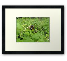 Acrobatic Bumble-Bee. Framed Print