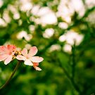 Little Blossoms by onehappycamper