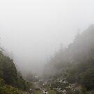 A Beautiful Fog by Troy Gooch