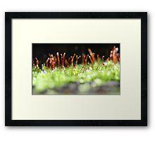 moss kingdom Framed Print