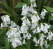 White Bells by Loisb