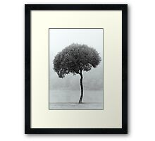 24.9.2015: Lonely Tree Framed Print