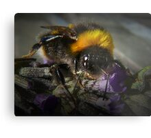 Just Bumble (2) Metal Print