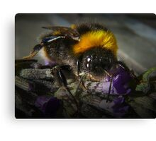 Just Bumble (2) Canvas Print