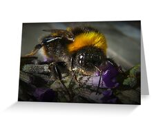 Just Bumble (2) Greeting Card