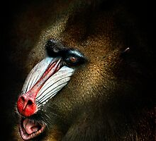 The Mandrill by Tarrby
