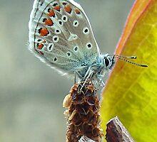 moth by WILT