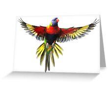 the rainbow lorikeet Greeting Card
