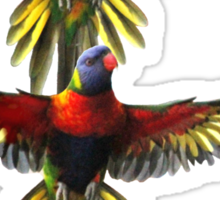 rainbow lorikeet t-shirt Sticker