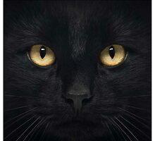 cat by naru one
