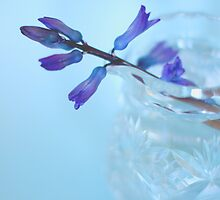 Flowers in a Glass  by Nicola  Pearson