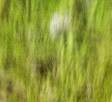 Mossy trunk by Patrick Morand