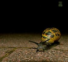 What are you Lookin' At?! — The Snail by Brad Lynch