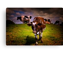 Hill Cows Canvas Print