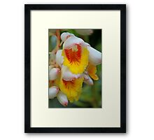 Ginger flower Framed Print