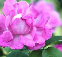 Hot Pink! by Ree  Reid