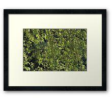 Sunlit Foliage Framed Print