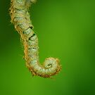 New fern by Al Williscroft