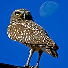 Moonbeam Owl  by Chuck Gardner
