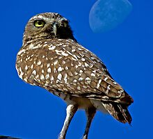 Moonbeam Owl  by Chuck Gardner