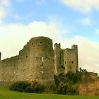 Trim Castle by Martina Fagan