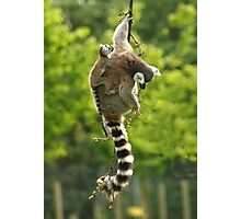 lemur Photographic Print