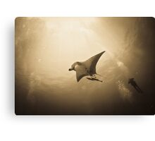 Soaring Manta with remora in the sun Canvas Print