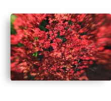 I am Red Canvas Print