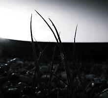 Low Light by Josephine Pugh